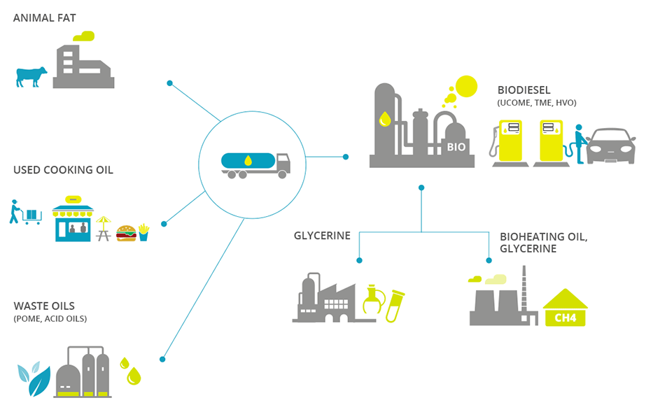 Biodiesel UCOME & TME value chain